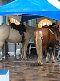 rera_horse.jpg